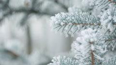 fir branches covered with hoar frost shoot in raw, - stock footage
