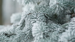 fir branches covered with hoar frost shoot in raw, pan movement - stock footage