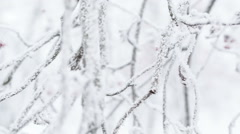 Frosted tree branche pan movement, shoot in raw Stock Footage
