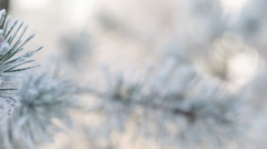 Fir branches covered with hoar frost shoot in raw, slide movement Stock Footage