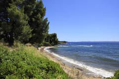 Beautiful coast of the Aegean Sea with pine trees. - stock photo