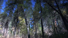 4K Forest Trees Blue Sky Reflected In Creek Sharp Focus Stock Footage
