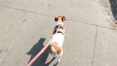 Dog is walking with checkered pattern leash Stock Footage