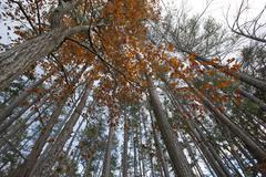 Forest canopy Stock Photos