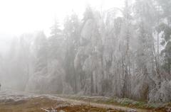 cold and fog. branches of trees icing.. - stock photo