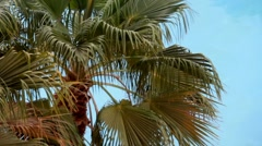 Palm tree on blue water background Stock Footage