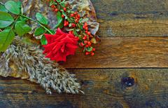 red rose and foliage on rustic wooden table - stock photo
