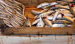 freshy caught fish on sale at fishmongers - stock photo
