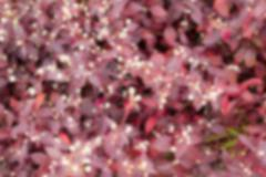 Blurred of red  flowers Stock Photos