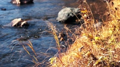 Forest river in the fall Stock Footage