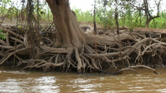 Tree roots eroded riverbank, 4k - stock footage