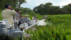 Wattled jacana, tourists, 4k Stock Footage