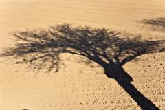 Stock Photo of freshly ploughed acre with shadow of trees