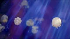 Blooms of white jellyfish - stock footage