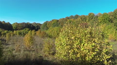 55 seconds  of Flight  over  autumn wood . Aerial Landscape Stock Footage
