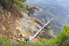 Dried up dead tree on the stone coast of the Aegean Sea. Stock Photos