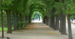 Pathway path alley perspective trees row Schonbrunn palace garden park Vienna Stock Footage