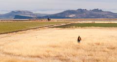lone hunter bird dog hunting fowl birds tule lake - stock photo