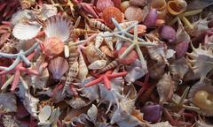 Seashells as background - stock photo