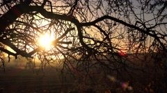 autumn sunrise rural landscape through branches of tree - stock footage