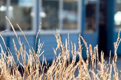 Slim morning blades of bright straw grass Stock Photos