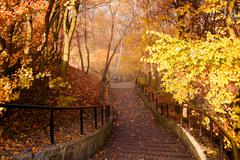 Autumn season colorful trees in park with stairs Stock Photos