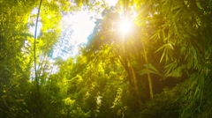 afternoon sun on the jungle in thailand - stock footage