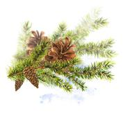 Christmas Watercolor with Sprig of Fir Trees Stock Illustration