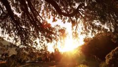 Sunset under the tree Stock Footage