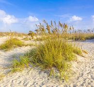 dunes with grass at fine sandy beach without people - stock photo