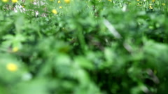 The young beautiful woman in a wreath from Globeflower in the field Stock Footage