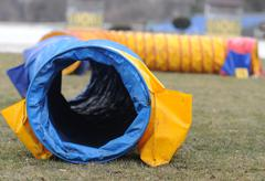Agility equipment tunnel for dog Stock Photos
