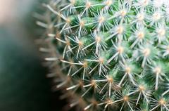 Close up of globe shaped cactus with long thorns Stock Photos