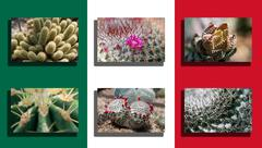 Stock Photo of mexico flag with cactus picture