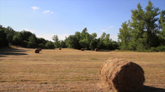 Static of Meadow with Grass Mowed - stock footage