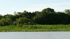 Boat ride Pantanal wetlands, slowmo Stock Footage