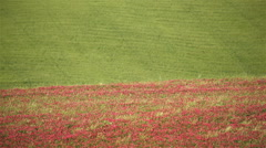 Red and green colors in spring season cultivated fields - stock footage