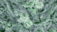 Stock Video Footage of Snow covered Christmas tree with falling snowflakes