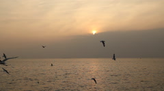 Seagulls with sunset at Bang Pu beach Stock Footage