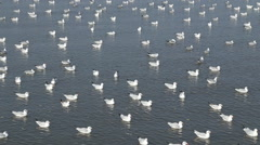 Seagull swimming on the sea at Bang Pu beach Stock Footage