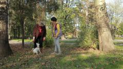 Very funny and hyperactive jack russell playing with older woman and young girl. Stock Footage