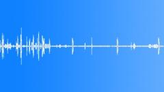 Tui bird singing Sound Effect