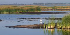 Quivira national wildlife refuge Stock Photos
