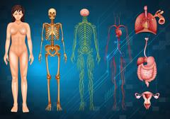 Human body systems Stock Illustration