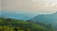 Green tea plantations in Munnar, Kerala, India Stock Footage