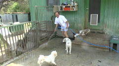 Cleaning Kennels Stock Footage