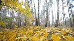 The autumn leaf fall in the forest - stock footage