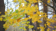 Autumn trees with multi-coloured leaves Stock Footage