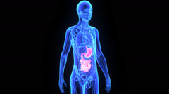 Digestive system - stock footage