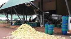 Farmer working with corn peeling machine. Stock Footage